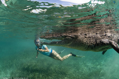 Ảnh: Cô gái xinh đẹp mạo hiểm lặn cùng cá sấu khổng lồ - 2
