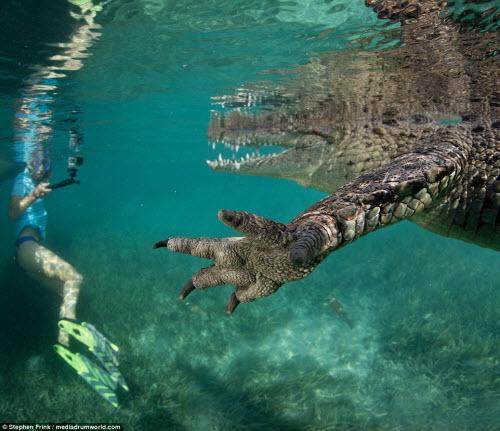 Ảnh: Cô gái xinh đẹp mạo hiểm lặn cùng cá sấu khổng lồ - 3