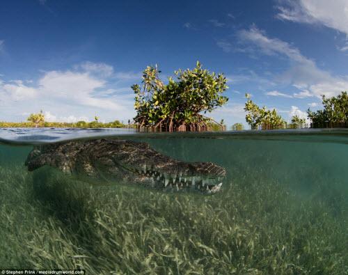 Ảnh: Cô gái xinh đẹp mạo hiểm lặn cùng cá sấu khổng lồ - 4