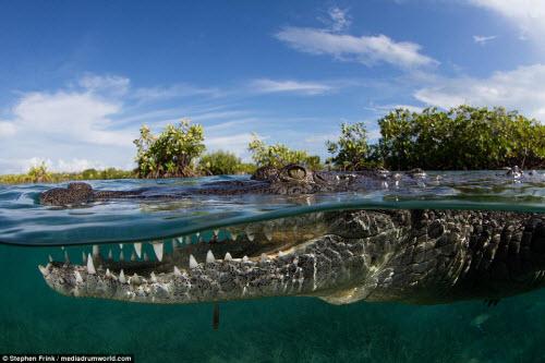 Ảnh: Cô gái xinh đẹp mạo hiểm lặn cùng cá sấu khổng lồ - 5