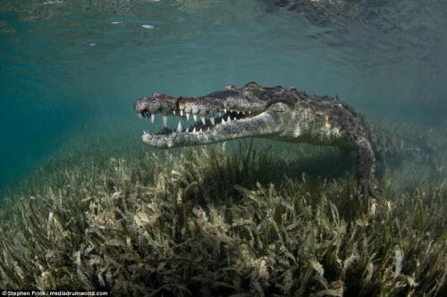 Ảnh: Cô gái xinh đẹp mạo hiểm lặn cùng cá sấu khổng lồ - 6