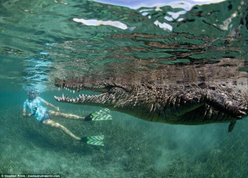 Ảnh: Cô gái xinh đẹp mạo hiểm lặn cùng cá sấu khổng lồ - 7