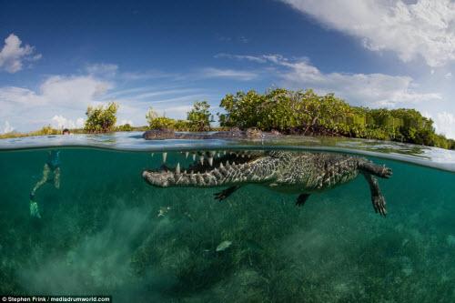 Ảnh: Cô gái xinh đẹp mạo hiểm lặn cùng cá sấu khổng lồ - 8