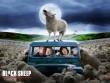Trailer phim: Black Sheep