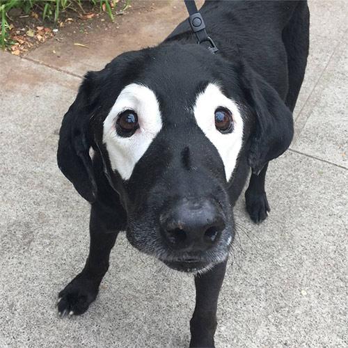 """Chú chó """"số nhọ"""" bị dân mạng chế ảnh - 1"""