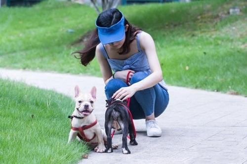 Nữ sinh kiếm bộn tiền nhờ nghề dắt chó thuê - 3