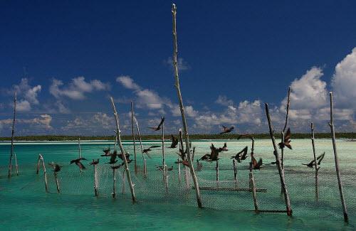 Khám phá đảo hình nhẫn giữa Thái Bình Dương - 7