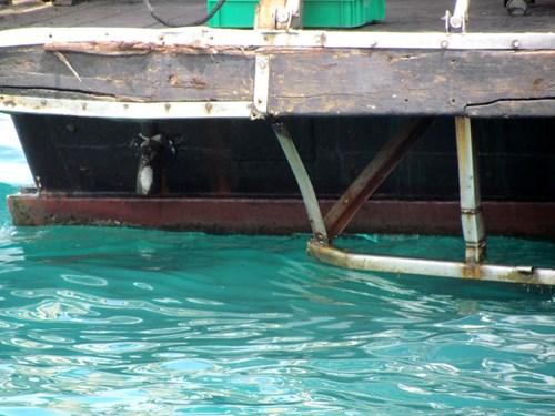 Khánh Hòa: Tàu du lịch bị đâm chìm ngay tại cảng - 6