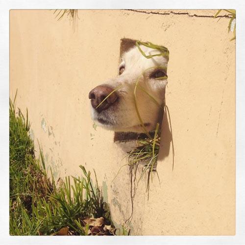 Cuộc đời không có lỗ thì chó sẽ bớt khổ! - 1
