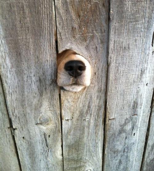 Cuộc đời không có lỗ thì chó sẽ bớt khổ! - 5