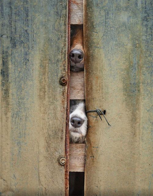Cuộc đời không có lỗ thì chó sẽ bớt khổ! - 6