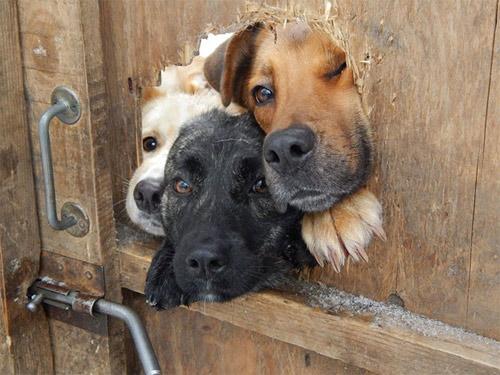 Cuộc đời không có lỗ thì chó sẽ bớt khổ! - 7
