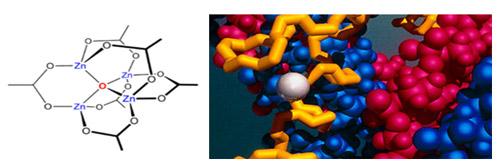 VHN Bio – Ứng dụng công nghệ cao trong sản xuất dược phẩm - 1