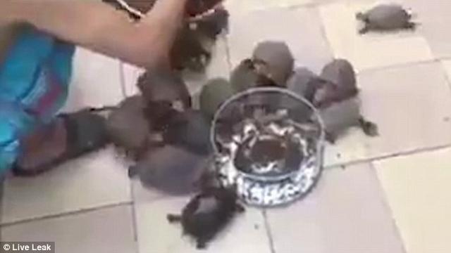 """Video: Rùa chạy """"như bay"""" khi chủ gọi cho ăn - 2"""