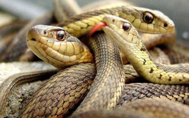 Người đàn ông Mỹ chết bí ẩn cùng 70 con rắn trong nhà - 1