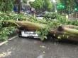 Việt Nam còn hứng chịu bao nhiêu cơn bão trong năm nay?