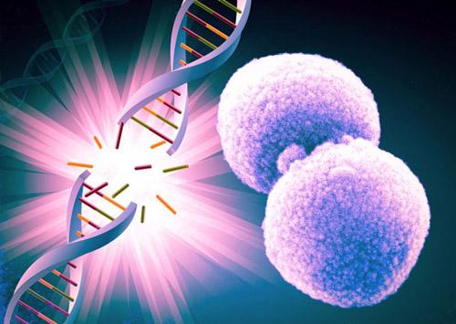 Chủ động thải độc tế bào ngăn ngừa ung bướu do thực phẩm bẩn - 1