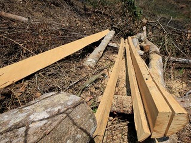 Rúng động: Cán bộ tuần tra bị chém chết giữa rừng - 1