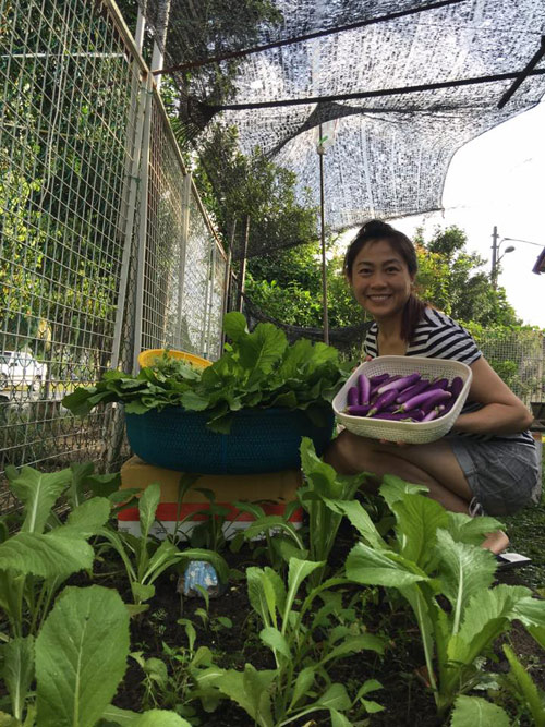 Mẹ Việt đưa giống cây sang Malaysia phủ kín vườn 200m2 - 1