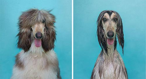Hình ảnh cún cưng tắm xong sẽ ngộ như thế này đây! - 7