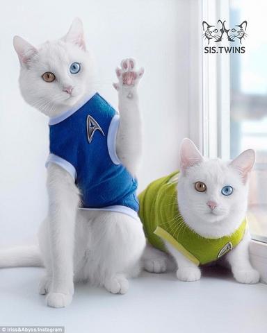"""Cặp mèo đẹp """"siêu thực"""" với tỉ lệ xuất hiện 1/1 triệu - 5"""