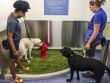 Mỹ: Thú cưng cũng có toilet riêng tại sân bay