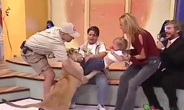 Video: Sư tử vồ em bé ngay trên sóng truyền hình Mexico - 2