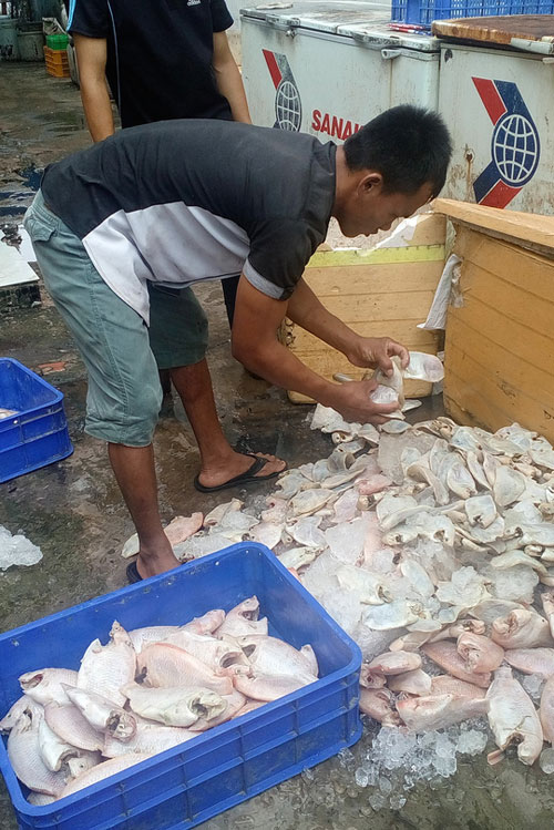 Phát hiện cả tấn cá thối tại quán cơm công nhân - 1