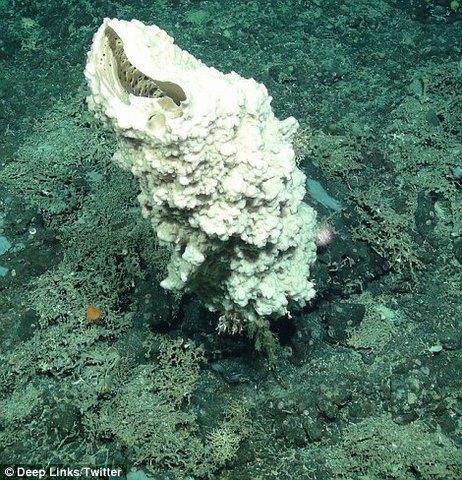 Sinh vật kì dị ở chân núi dưới biển cao nhất nước Anh - 7