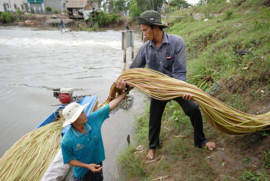 Sản vật đầu mùa nước nổi giá rất cao - 2