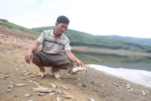 Cá chết hàng loạt, phủ trắng hồ ở Quảng Nam - 1
