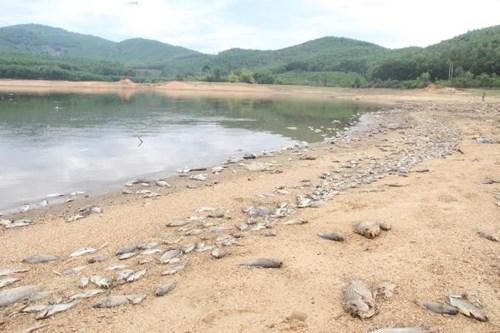 Cá chết hàng loạt, phủ trắng hồ ở Quảng Nam - 3