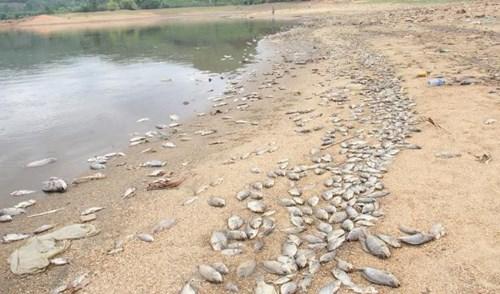 Cá chết hàng loạt, phủ trắng hồ ở Quảng Nam - 4