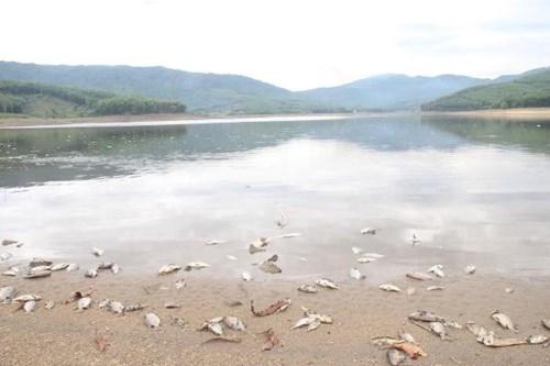 Cá chết hàng loạt, phủ trắng hồ ở Quảng Nam - 5