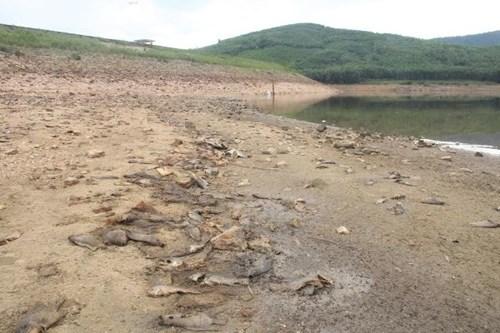 Cá chết hàng loạt, phủ trắng hồ ở Quảng Nam - 6
