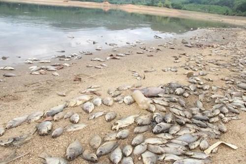 Cá chết hàng loạt, phủ trắng hồ ở Quảng Nam - 7