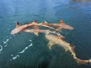 Thế giới - Úc: Cá sấu sát cánh cá mập bao vây thuyền câu