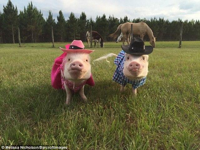 Ngắm 2 chú lợn này, nhiều người đã từ bỏ ăn thịt lợn - 3
