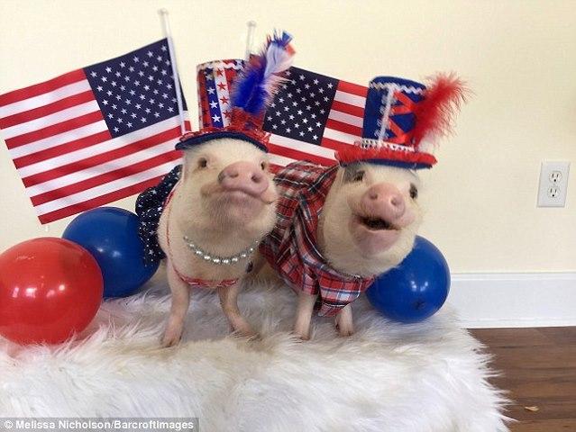 Ngắm 2 chú lợn này, nhiều người đã từ bỏ ăn thịt lợn - 1
