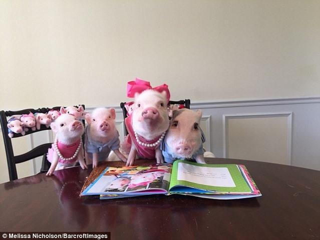 Ngắm 2 chú lợn này, nhiều người đã từ bỏ ăn thịt lợn - 4