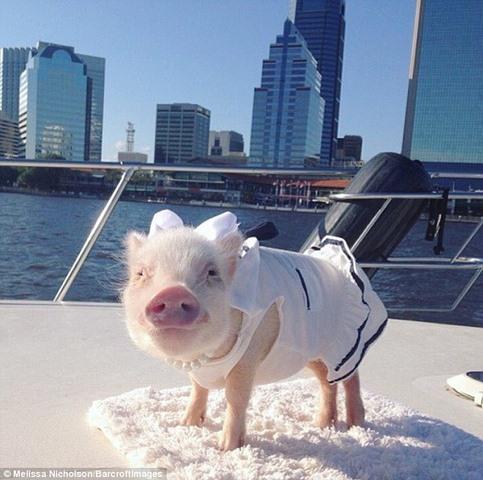 Ngắm 2 chú lợn này, nhiều người đã từ bỏ ăn thịt lợn - 7
