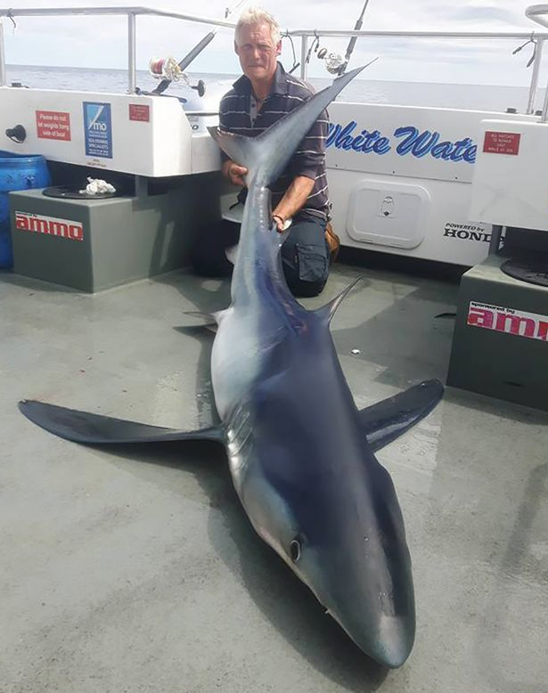 Lần đầu ra khơi, câu được cá mập xanh lớn nhất nước Anh - 2