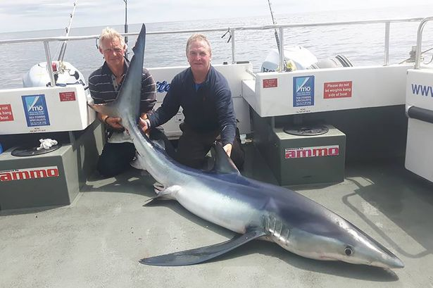 Lần đầu ra khơi, câu được cá mập xanh lớn nhất nước Anh - 1