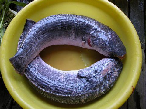 30 phút vào bếp với cá hấp tiêu thơm ngon, đậm đà - 1