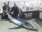 Phi thường - kỳ quặc - Lần đầu ra khơi, câu được cá mập xanh lớn nhất nước Anh