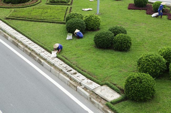 Cắt cỏ đại lộ Thăng Long, công nhân được trả bao nhiêu? - 1