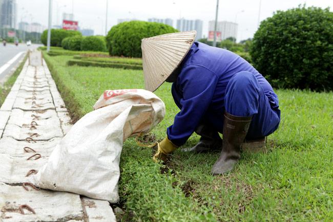 Cắt cỏ đại lộ Thăng Long, công nhân được trả bao nhiêu? - 4