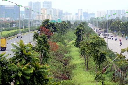 Chi 53 tỷ cắt cỏ tỉa cây, đại lộ Thăng Long vẫn như rừng - 1