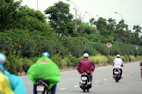 Chi 53 tỷ cắt cỏ tỉa cây, đại lộ Thăng Long vẫn như rừng - 11