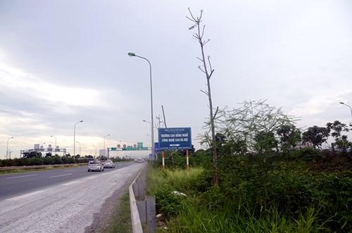 Chi 53 tỷ cắt cỏ tỉa cây, đại lộ Thăng Long vẫn như rừng - 12